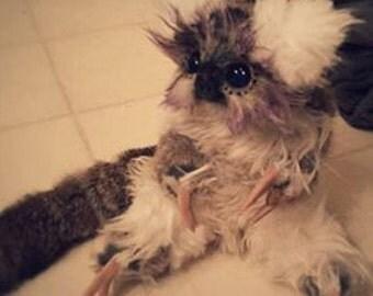 Posable Koala Sloth-(SOLD)