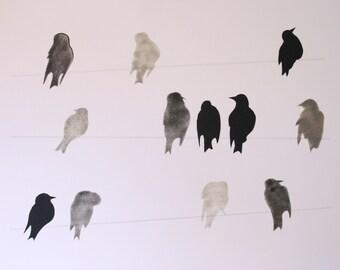 Birds Past Present + Future