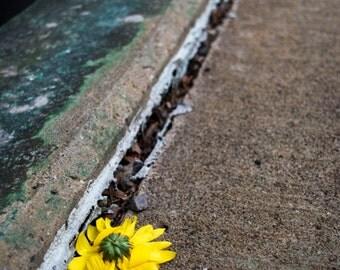 Crushed Flower - Digital
