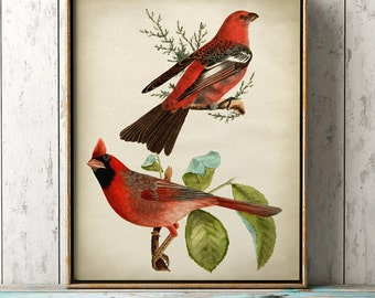 Lovely red birds print, bird poster, ornithology, songbirds, bird illustration, bird home decor, bird art