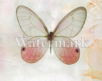 Digital Download - Pink Glasswing Butterfly ART Print - Printable - Insect Download - Paper Supply  - Digital ART Painting