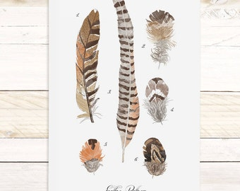 Feather Study - large feathers wall hanging, wood trim art printed on textured cotton canvas. Scientific chart Vol.5