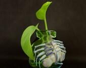 Facehugger Glass Globe Terrarium in Emerald Green & Silver Amethyst, Ready to Ship #251
