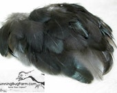 """Metallic Black Feathers Natural Feathers Cruelty Free Feathers Real Feather Loose Feathers Rooster Feathers For Crafts 30 1.5-2.5"""" / 2239"""