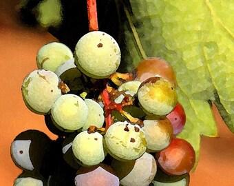 Fine Art Photography-Artsy Grapes