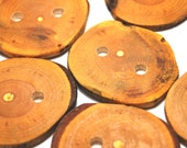Handmade Tree Branch Wood Buttons, Natural Wooden Buttons, Ash in Multiple Sizes, Set of 6