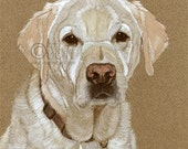 White Labrador Print from original gouache painting