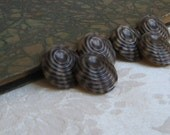 "Vintage Shell Buttons 3/4"" Shank Set of 6, Taupe Brown Ridged Zebra Stripe, Exotic Tropical Beach"