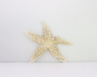 Vintage Starfish Specimen