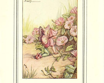 THE CONVOLVULUS FAIRY (Bindweed) Original Antique c. 1940 Book Plate Book of the Flower Fairies Cicely M Barker