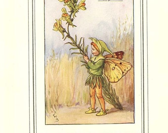 THE TOADFLAX FAIRY Original Antique c 1940 Color Plate The Book of Flower Fairies Cicely Barker