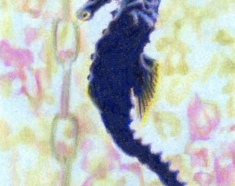 """Original ACEO - Black Seahorse - 2.5"""" x 3.5"""" Unique Artwork - Free Shipping - Portion of Proceeds to Charity"""