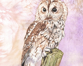 Tawny Owl print of watercolour painting, 5 by 7 size smallest print, Owl painting, owl watercolor, Tawny Owl painting