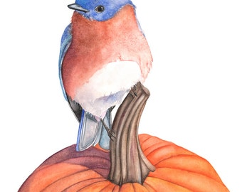 Bluebird print of watercolor painting, BB11416, Fall print, fall watercolor print, bluebird on pumpkin print, Thanksgiving print,5 by 7 size