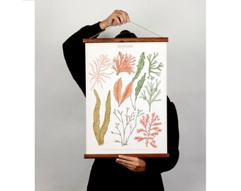 Seaweeds canvas poster - vintage educational chart illustration ALP2001