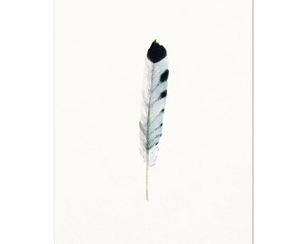 Watercolor Feather Print.  Archival Print of my Original Watercolor Feather.