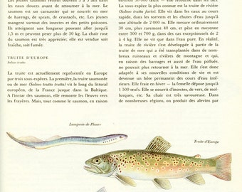 1974 Vintage French fish poster Vintage fish print Fish decor Fish gift Fishing poster Fishing gift Salmon poster Fishing print Trout poster