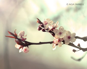 Cherry Blossom Art, Flower Photography, Mint and Coral, Large Flower Art, Tree Branch Photography, Flower Print, Photography Wall Art