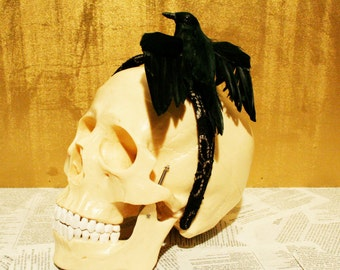 Black Crow on Gold and Black Lace Headband