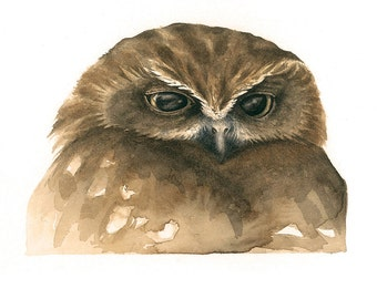 Boobook Owl Original Watercolour Avian Faces Series 5/12