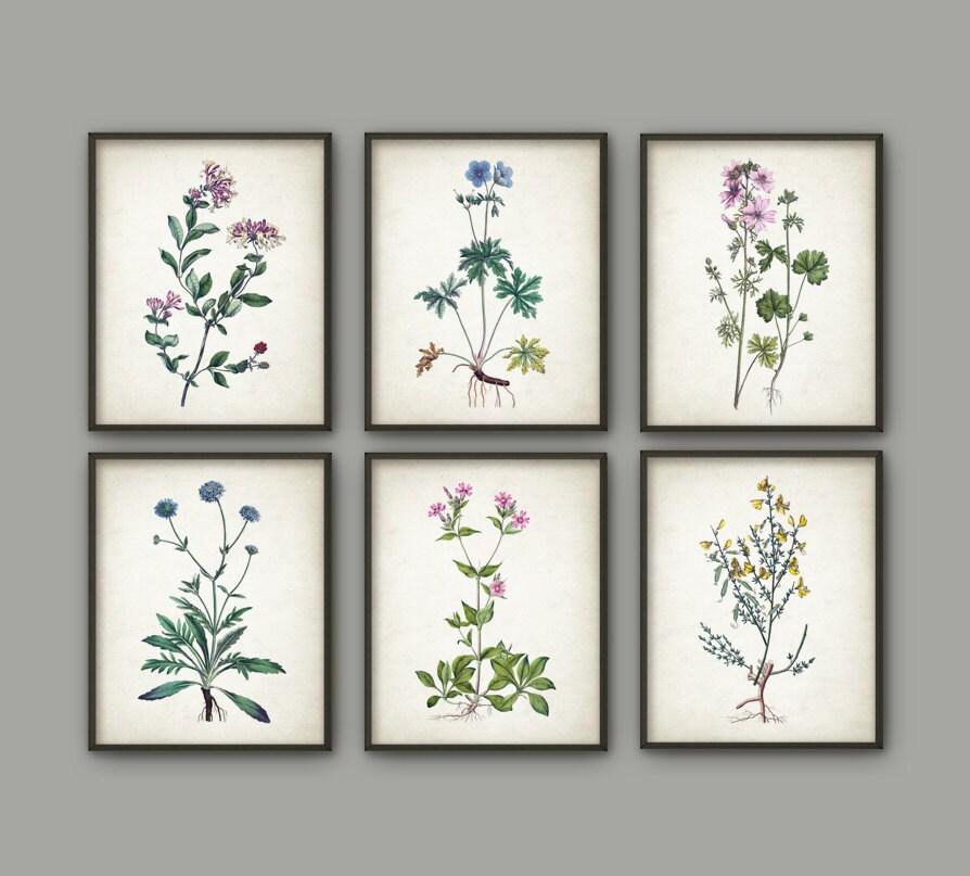 Wild flower print set of 6 vintage flower botanical home for Ready set decor reviews