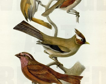 Collection of Birds on Tree Branch Graphic - High Resolution Digital Download No.703