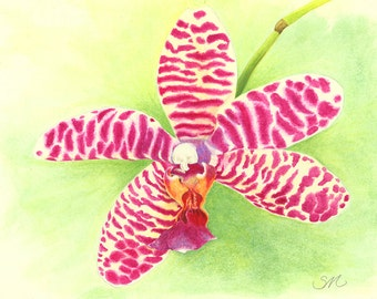 115 Orchid from gouache painting