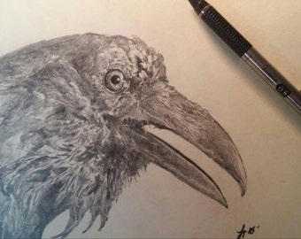 Somewhat a Raven