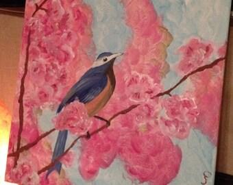 Blue Wren on Cherry Blossoms