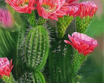 Spiky Beauty, ORIGINAL watercolor painting, cactus painting, watercolor flower, watercolor art, EsperoArt.
