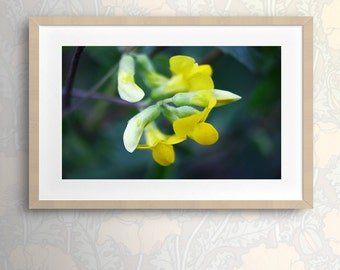 Nature Photography Botanical Art Floral Wall Art Floral Print Macro Flower Art Flower Art Yellow flower Flower decor Nature Fine Art Photo