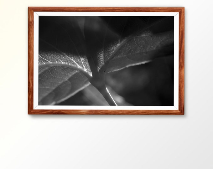 Printable photo Digital Download Macro Photograph Black and White Leaf Print Nature Photograph Nature print Leaf Photo Art Instant download