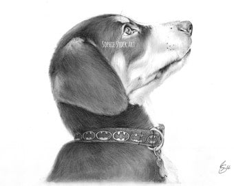 Pet Portrait on A4 - Custom, bespoke artwork. Wall Art, Graphite pencil drawing and sketches