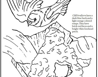 American Avocet Coloring Page