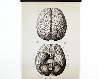 Pull Down Chart - Vintage Anatomy Brains Print - Medium Size Reproduction Canvas Wall Hanging - Biology Educational Diagram Poster - CP102CV