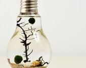 Marimo Aqua Terrarium// Lightbulb// Desk Accessory// Green Gift