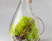 Hanging Teardrop Terrarium Amethyst Crystal Point with Pyrite || DIY Kit