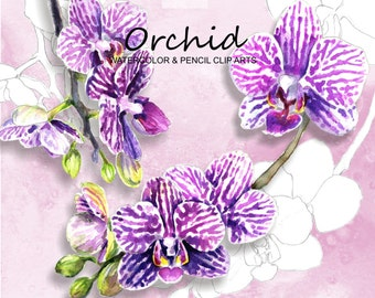 Orchids-Watercolor & Pencil Clip arts- Hand Painted and Hand Drawn digital clip arts, printable graphics