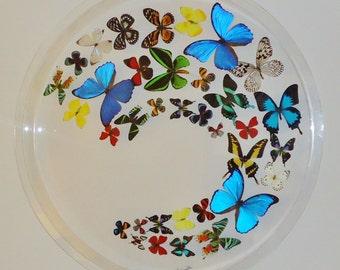 """30"""" circle! ,framed butterflies, mounted butterflies, real butterfly art, butterfly display,"""