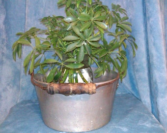 Old aluminum pot planter