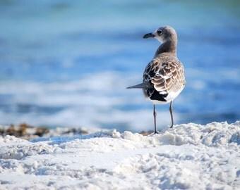 Sea Gull on Beach Photo