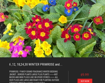 6 , 12 , 18 , 24 , 30 SPRING PRIMROSE and PANSY mixed perenniel garden plants large plug