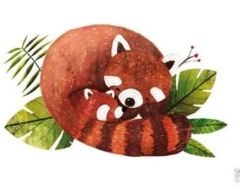 Mr red Panda and his cub Print