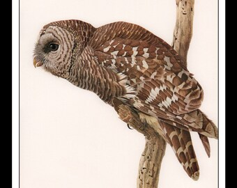 """Vintage Book Print 1968 Birds Of The Eastern Forest : Barred Owl Single Page Wall Art Decor Print 9.5"""" x 13"""""""