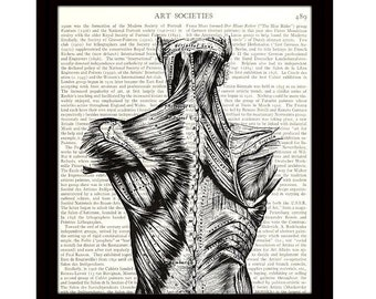 Dictionary Art Print, 8 x 10, Back Muscles, Medical Anatomy Science, Upcycled Vintage Book Page, Ready to Frame - Item 386