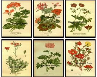 "Set of six Antique Flowers from the 1800's 23,24,25,26,35,36       (8"" x 10"" Prints)"