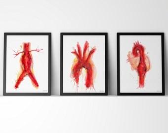 Cardiovascular Watercolor Art Print Set - Abdominal Aneurysm, Aorta and Thoracic Aneurysm Art Set - Anatomy Art Three Print Set