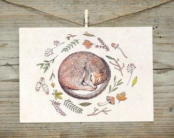 Postcard - Sleeping Squirrel