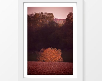 "Solo / Tree forest plowed field autumn photo printable wall art home decor downloadable art to print yourself / A3 and 11"" x 17"""