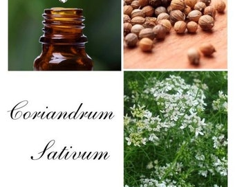 Coriander Oil, Coriander Essential Oil, Coriander Seed Oil, Coriander Essential Oil uses, 100% Pure Authentic Coriander Essential Oi
